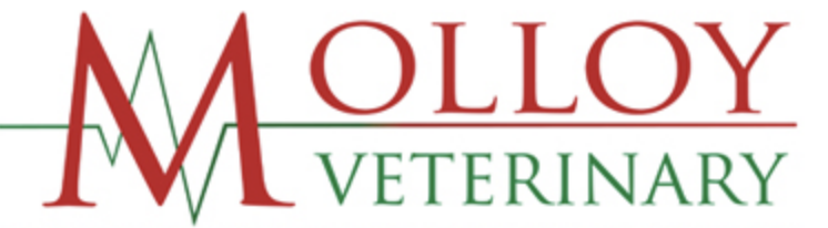 Molloy Veterinary® Leading supplier to Ireland's veterinary services