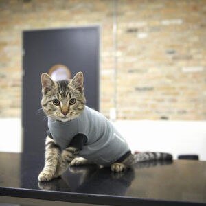 Buster Body Suits for Cats